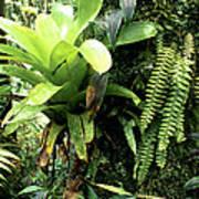 Bromeliad On Tree Trunk El Yunque National Forest Print by Thomas R Fletcher