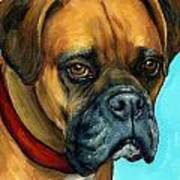 Brown Boxer On Turquoise Print by Dottie Dracos