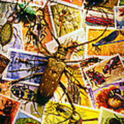 Bugs On Postage Stamps Print by Garry Gay
