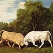 Bulls Fighting Print by George Stubbs