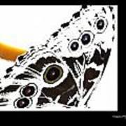 Butterfly Dream Print by Xoanxo Cespon