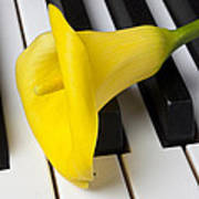 Calla Lily On Keyboard Print by Garry Gay
