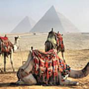 Camel And Pyramids, Caro, Egypt. Print by Oudi