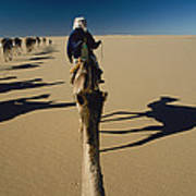 Camel Caravan And Their Shadows Print by Carsten Peter