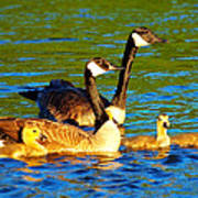 Canada Geese Family Print by Paul Ge