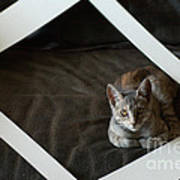 Cat In A Frame Print by Micah May