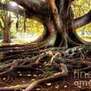 Centenarian Tree Print by Carlos Caetano