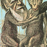 Charles Darwin Caricature, 1874 Print by Science Source