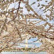 Cherry Blossoms Washington Dc 3 Print by Metro DC Photography