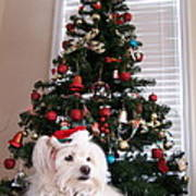 Christmas Card Dog Print by Vijay Sharon Govender
