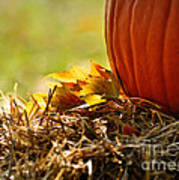 Colorful Autumn Print by Nava Thompson