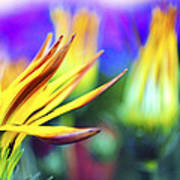 Colorful Flowers Print by Sumit Mehndiratta