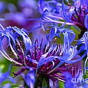 Cornflower Color Print by Byron Varvarigos