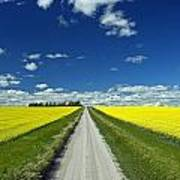 Country Road With Blooming Canola Print by Dave Reede