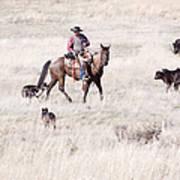 Cowboy Print by Cindy Singleton