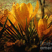 Crocus In Spring Bloom Print by Ann Powell
