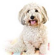 Cute Dog Portrait Print by Elena Elisseeva