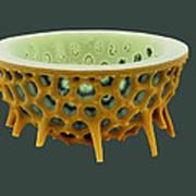 Diatom, Sem Print by David Mccarthy