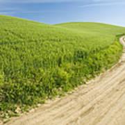 Dirt Road Through Field, Palouse, Washington Print by Paul Edmondson