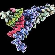 Dna Transcription Factor, Molecular Model Print by Laguna Design