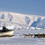 Dog Sled, Qaanaaq, Greenland Print by Louise Murray