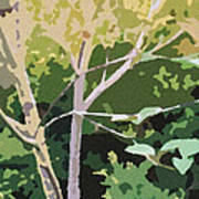 Dogwood I Print by Katharine Birkett