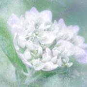 Dreaming Floral Print by Brenda Bryant