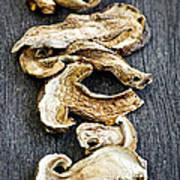 Dry Porcini Mushrooms Print by Elena Elisseeva