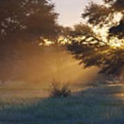 Early Morning Sun Beams Through Branches Of A Tree Print by Heinrich van den Berg