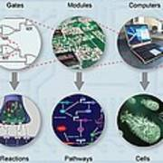 Electronic And Biologic Systems, Artwork Print by Equinox Graphics