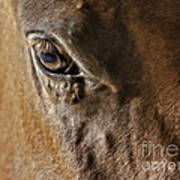 Eye Of The Horse Print by Susan Candelario