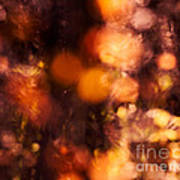 Fading Fall Flame Print by Royce Howland