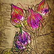 Faerie Caps Print by Judi Bagwell