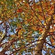 Fall Canopy Print by Barry Jones