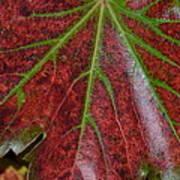 Fall On The Vine Print by Kim Hymes