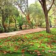 Fall Park Print by Carlos Caetano