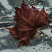 Fallen Leaf Print by Vladimir Kholostykh