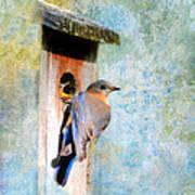 Female Eastern Bluebird At Nesting Box Print by Jai Johnson