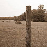 Fence And Field Print by Sheila Harnett