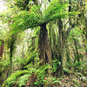 Fern Tree Print by MotHaiBaPhoto Prints