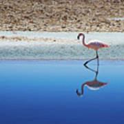Flamingo Print by MaCnuel