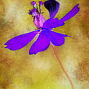 Flower Take Flight Print by Judi Bagwell