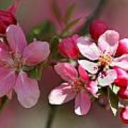 Flowering Crabapple Detail Print by Mark J Seefeldt
