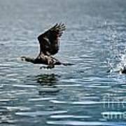 Flying Cormorant Bird Print by Mats Silvan