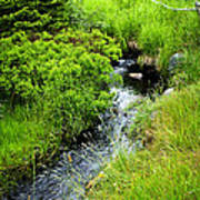 Forest Creek In Newfoundland Print by Elena Elisseeva