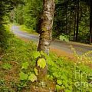 Forest Escape Print by Idaho Scenic Images Linda Lantzy