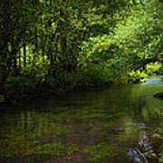 Forest River Print by Svetlana Sewell
