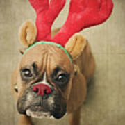 Funny Boxer Puppy Print by Jody Trappe Photography