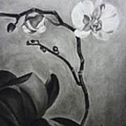 Galen's Orchid Print by Estephy Sabin Figueroa