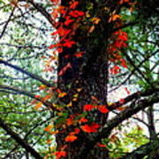 Garland Of Autumn Print by Karen Wiles